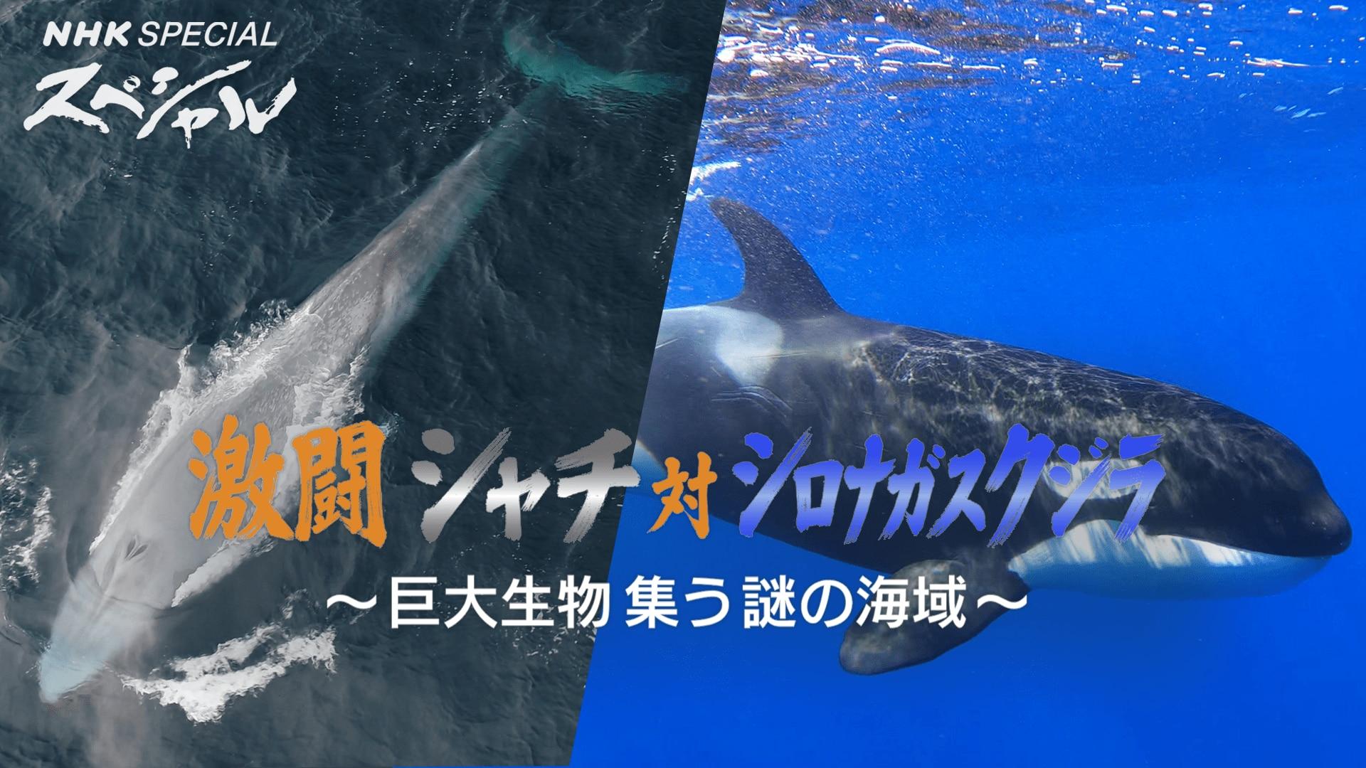 対 サメ シャチ